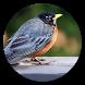 Bird Wallpapers HD by SundaDev