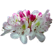 West Virginia Wildflowers by Steven Sullivan