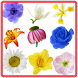 Anemone Flowers Connect Game by AndroidMatchesGames