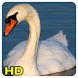 swan Wallpapers by Queru HD app