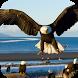 Bald Eagle. Live Wallpaper by Mobile Stranger