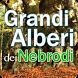 Grandi alberi dei Nebrodi by Goowai Edit
