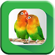 Kicau Burung Master Lengkap by Tone Apps