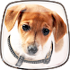 Cute Dogs Live Wallpaper by Cute Live Wallpapers And Backgrounds