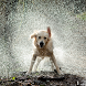 Cool Wet Dog at rain HD LWP by Rebrikov
