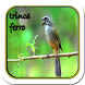 Canto De Trinca Ferro Classico by Megono