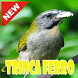 CANTOS DE TRINCA FERRO OFFLINE by SpoerterDev