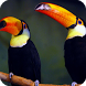 Toucan Live Wallpaper by GlobalWallpapers