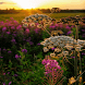 Evening Flowers Live Wallpaper