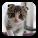 Scottish Fold Cat LWP by KKPICTURE