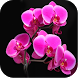 Orchid Wallpapers by Karim Gul