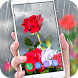 Rose Live Wallpaper 2018 with Waterdrops by Deeko Games
