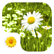 Flowers Live Wallpaper by Polymorph Studio