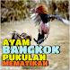 Ciri Ayam Bangkok Aduan dengan Pukulan Mematikan by Padepokan Cirebon-Banten