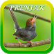 Chirping Prenjak Mp3 by AD Apps