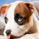 little puppy wallpaper by best wallpaper inc