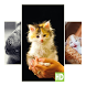 Cute Kitty Wallpapers by Brandon Apps