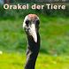 Orakel der Tiere Premium by Peter Denk