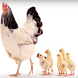 Anak ayam - tek kotek - Tanpa internet by indoni