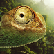 Jungle Chameleon LWP by solar trap studio