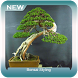 Bonsai Styling by Sandwalker Apps
