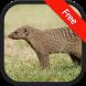 Mongoose sounds by RinradaDev