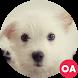 Dogs Wallpaper by Oryx Apps