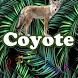 Best Coyote Sounds by MarcosMusic