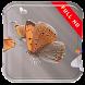 Butterflies in Slowmo LWP by Studio Tapeta Apps