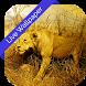 3D Real Safari Cube LWP by Daksh jain