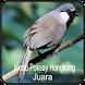 Kicau Poksay Hongkong Juara by Jehova app