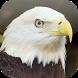 Suara Burung Elang by Mhmapp Studio
