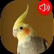 Cockatiel Sounds by RinradaDev