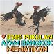 Mengenal 9 Jenis Pukulan Ayam Bangkok Aduan by Padepokan Cirebon-Banten