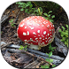 Natural Mushroom Wallpapers