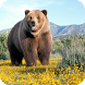 Bear Live Wallpaper by GlobalWallpapers