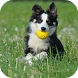 Dog Training by Knowledge App Technologies
