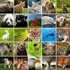 +1100 Animal Wallpapers by Catepe