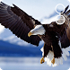 live eagle wallpaper by socialbestlivewallpaper