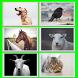 Animals Soundpad by Samuel Plavec