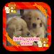 Super Cute Husky Puppies by PoPoMeda