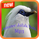 Master Jalak Bali Mp3