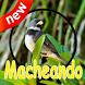 Canto de Coleiro Macheando Complete Mp3 by canto de app
