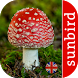 Mushroom Id - Identify Fungi by Isoperla
