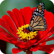 Butterfly Live Wallpaper by GlobalWallpapers