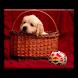 HotdogEd NNTP Provider by Sergey Pushkin