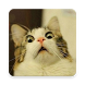 Cute Animal Funniest Videos by Elegant Solutions