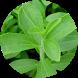 Stevia ☘ by POPULAR!