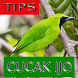 Tips Perawatan Cucak Ijo by Onyx Gemstone