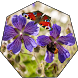 Purple Flowers Wallpaper Live by Akmact Apps Studio